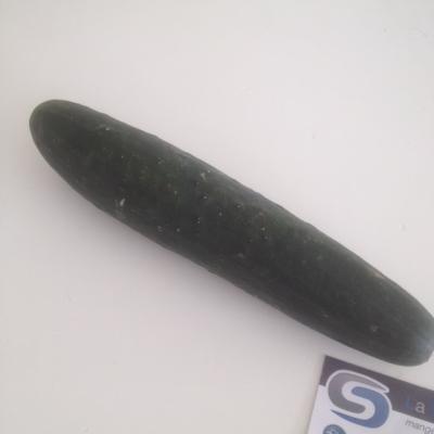 Concombre Noa Normand