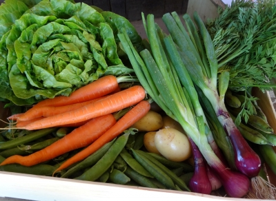 Légumes BIO locaux